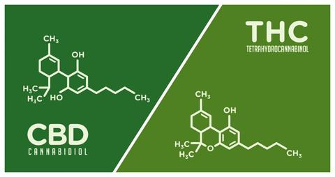 Getting Started with CBD: What is CBD?