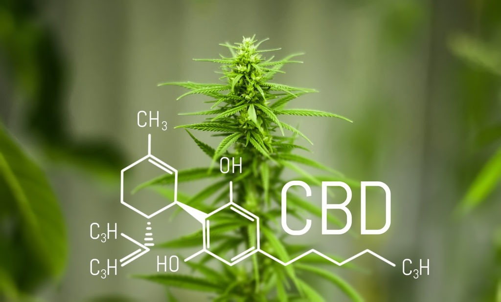 CBD Manufacturers in Central and South America
