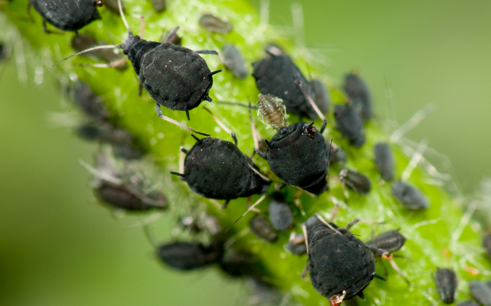 How does Grow Tent helpful in pest control?