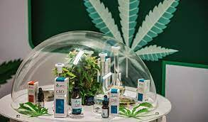How to Get a Cannabis License Using Cannabis License Services